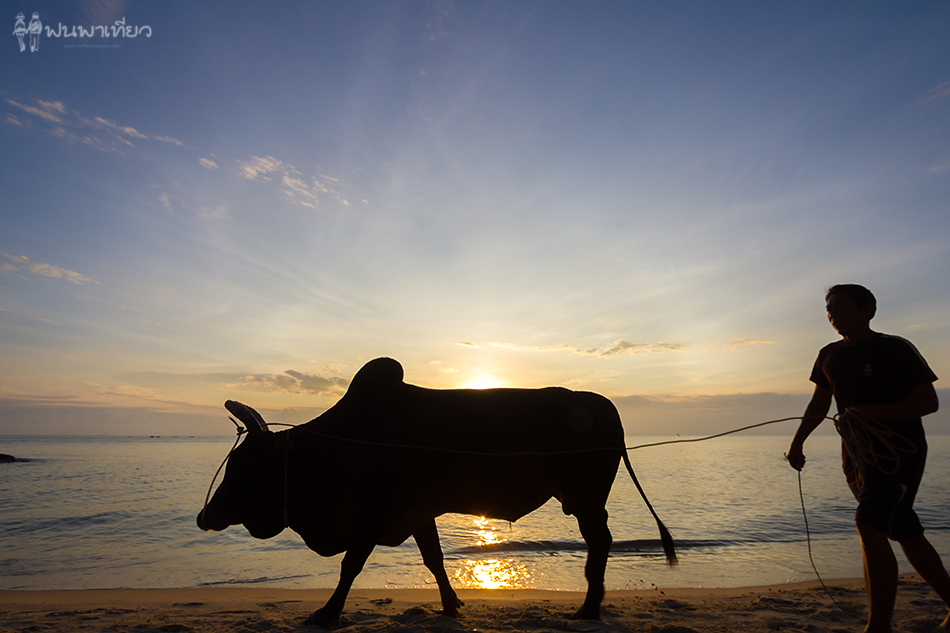 man-with-cow_